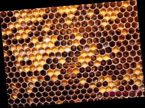 Лечение алкоголизма мёдом